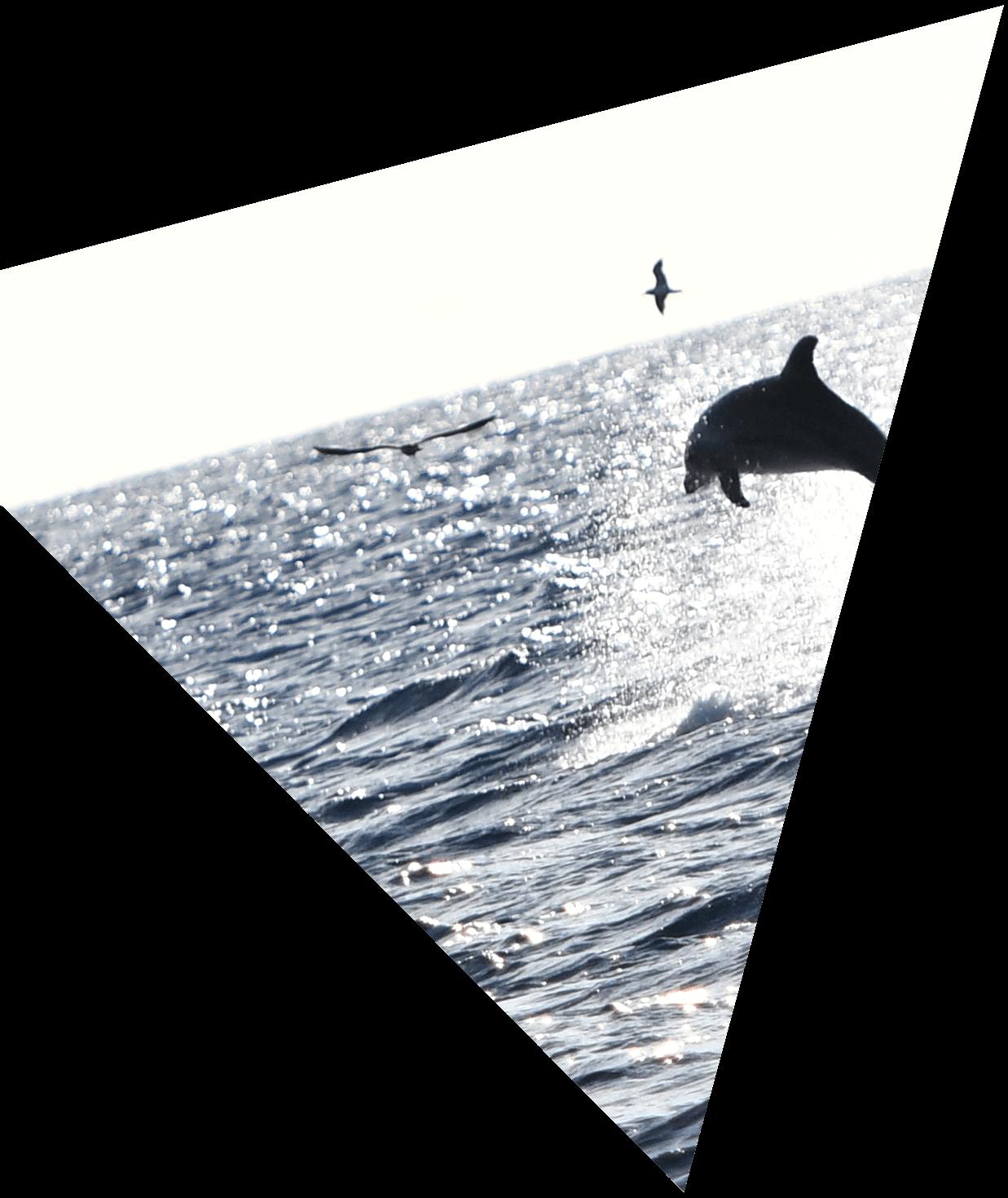 Dolphin on the sea